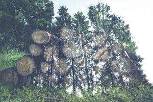 Tannen Wald Holz aus dem Gartenschaukelstühle hergestellt werden